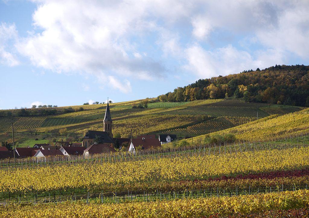Pfalz Spätburgunder