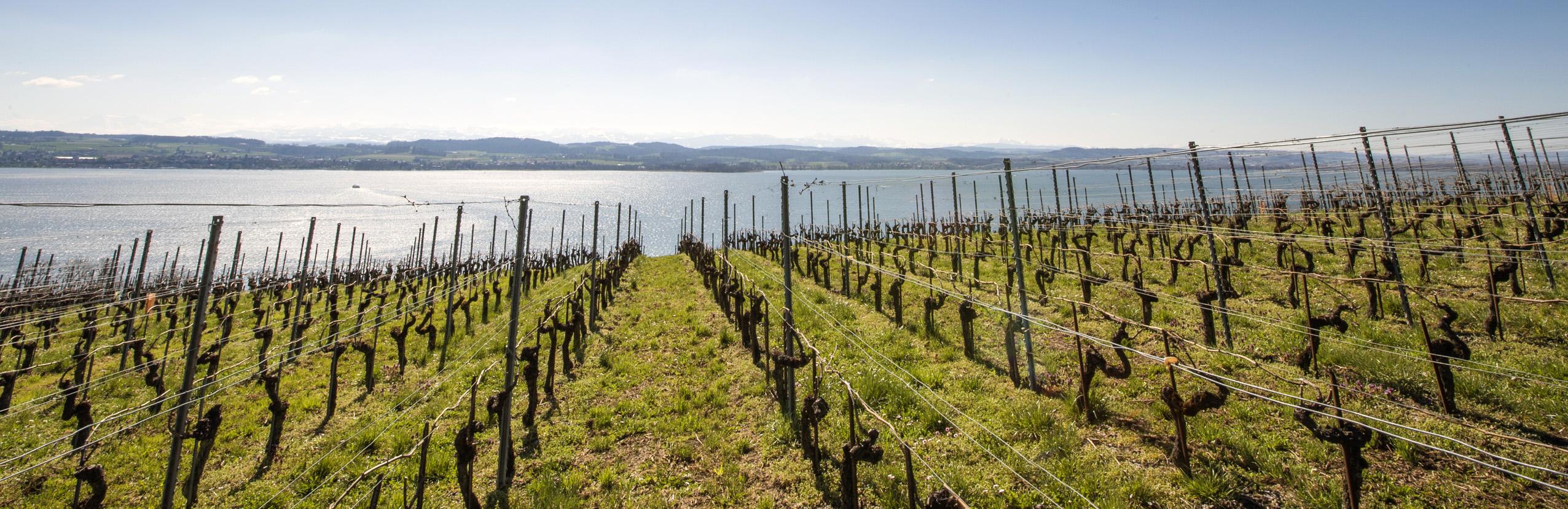 Petit Château - vin suisse