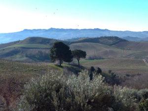 Vignes, monts et vaux - La Sicile